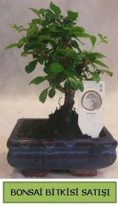 Bonsai ithal görsel minyatür japon ağacı  Şırnak çiçek siparişi sitesi