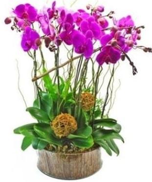 Ahşap kütükte lila mor orkide 8 li  Şırnak çiçek siparişi vermek