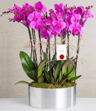 11 dallı mor orkide metal vazoda  Şırnak çiçekçi telefonları