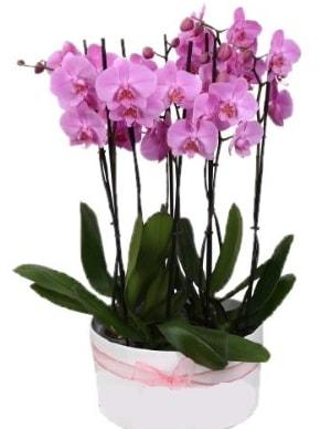 Beyaz seramik içerisinde 7 dallı mor orkide  Şırnak ucuz çiçek gönder