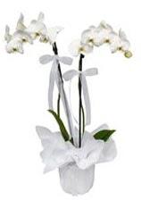 2 dallı beyaz orkide  Şırnak çiçek yolla , çiçek gönder , çiçekçi