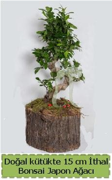 Doğal kütükte İthal bonsai japon ağacı  Şırnak çiçek , çiçekçi , çiçekçilik