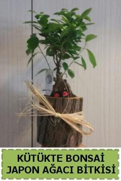 Kütük içerisinde doğal bonsai ağacı  Şırnak ucuz çiçek gönder