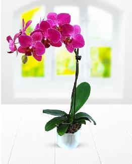 Tek dallı mor orkide  Şırnak hediye çiçek yolla
