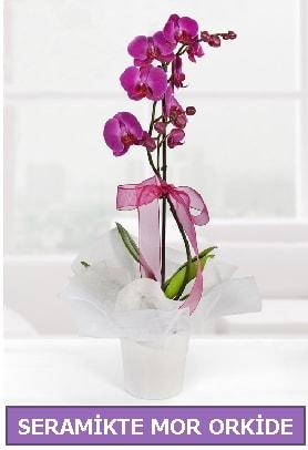 Seramik içerisinde birinci kalite tek dallı mor orkide  Şırnak çiçek gönderme