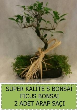 Ficus S Bonsai ve arap saçı  Şırnak ucuz çiçek gönder