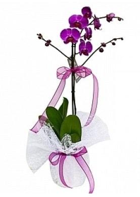 Tekli Mor Orkide  Şırnak çiçek satışı