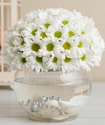 Fanusta beyaz Papatya  Şırnak hediye çiçek yolla