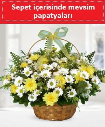 Sepet içerisinde mevsim papatyaları  Şırnak çiçek siparişi sitesi